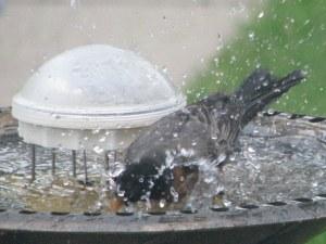 Why Bird Bath is Empty