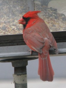 Cardinal also returned but he can Eat