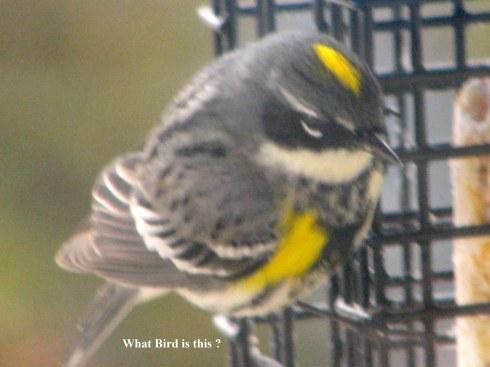 What Bird